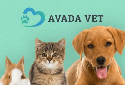 Free Website Templates - Veterinarian